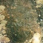 La Palma Petroglyphen